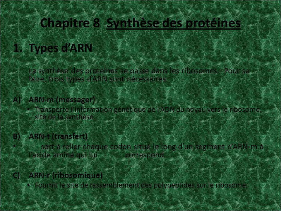 Chapitre 8 Synthèse des protéines
