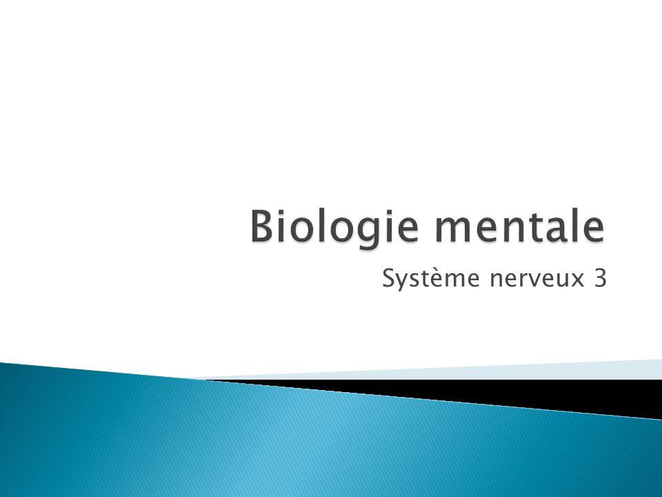 Biologie mentale Système nerveux 3