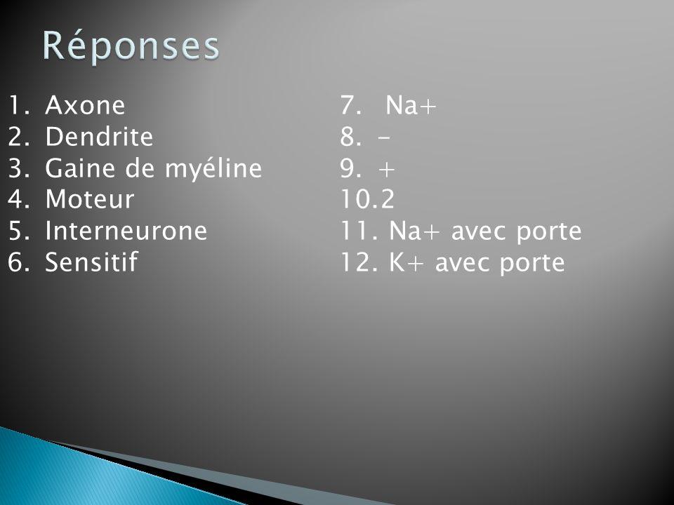 Réponses Axone Dendrite Gaine de myéline Moteur Interneurone Sensitif