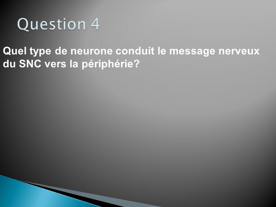 Question 4 Quel type de neurone conduit le message nerveux du SNC vers la périphérie