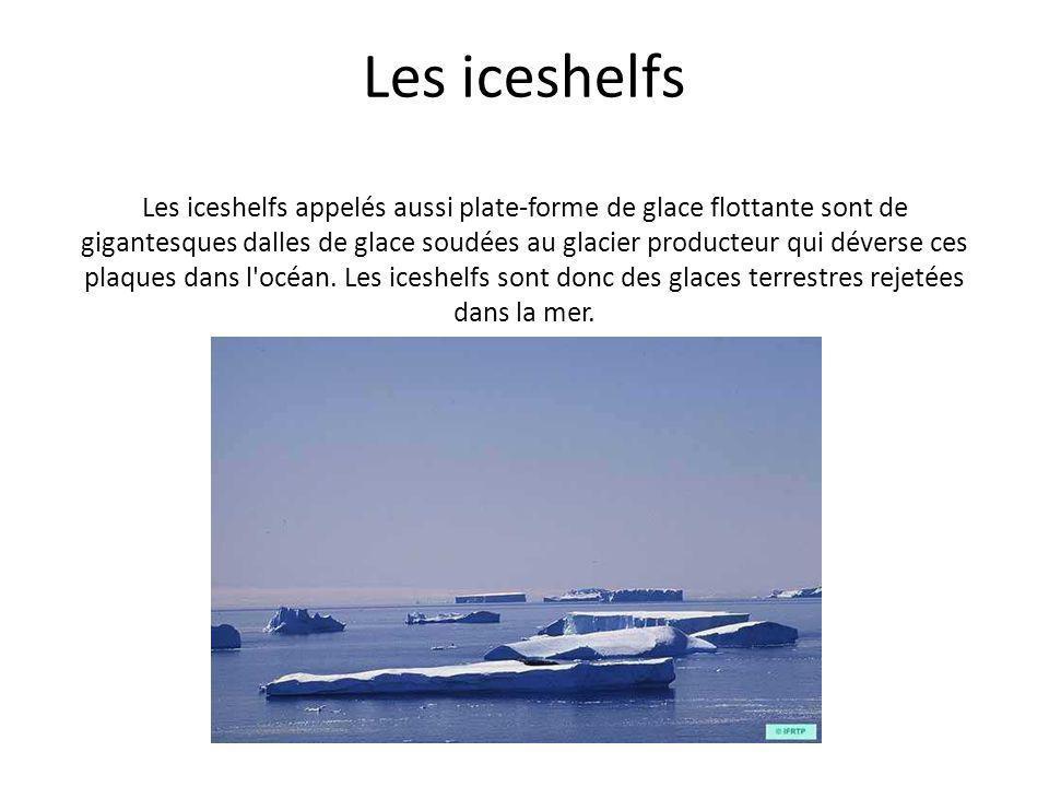 Les iceshelfs