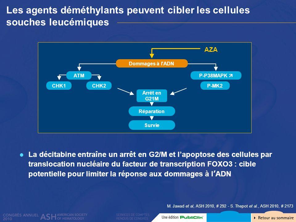 Les agents déméthylants peuvent cibler les cellules souches leucémiques
