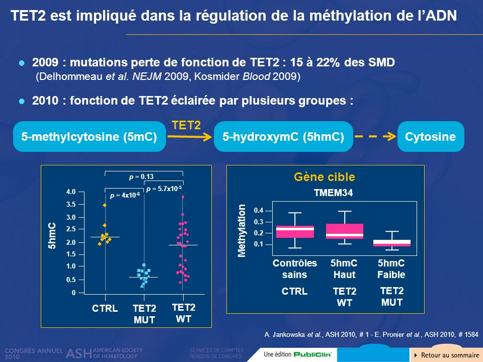 TET2 est impliqué dans la régulation de la méthylation de l'ADN