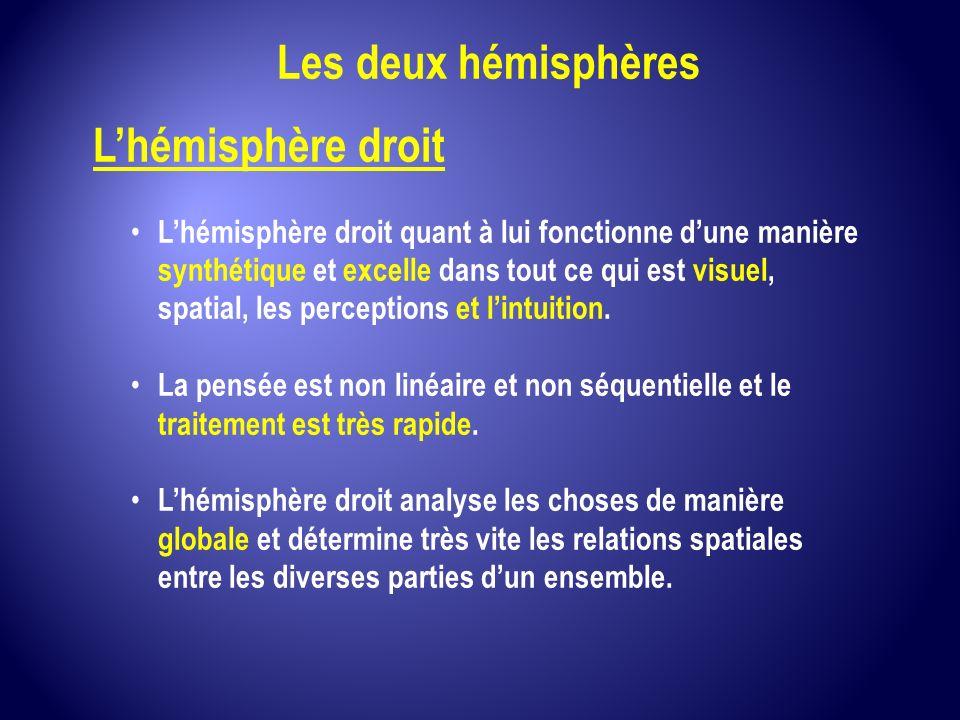 Les deux hémisphères L'hémisphère droit