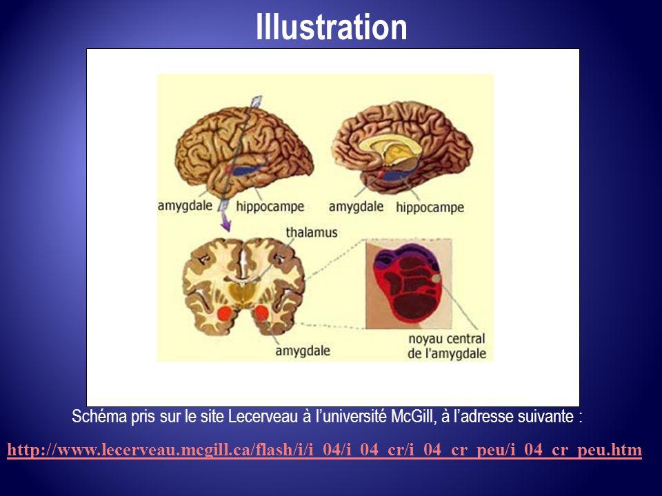 IllustrationSchéma pris sur le site Lecerveau à l'université McGill, à l'adresse suivante :