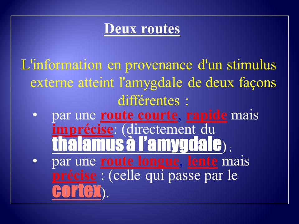 Deux routesL information en provenance d un stimulus externe atteint l amygdale de deux façons différentes :