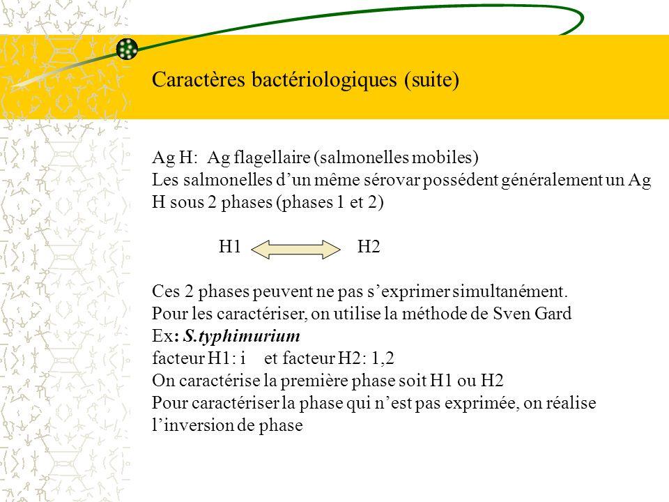 Caractères bactériologiques (suite)