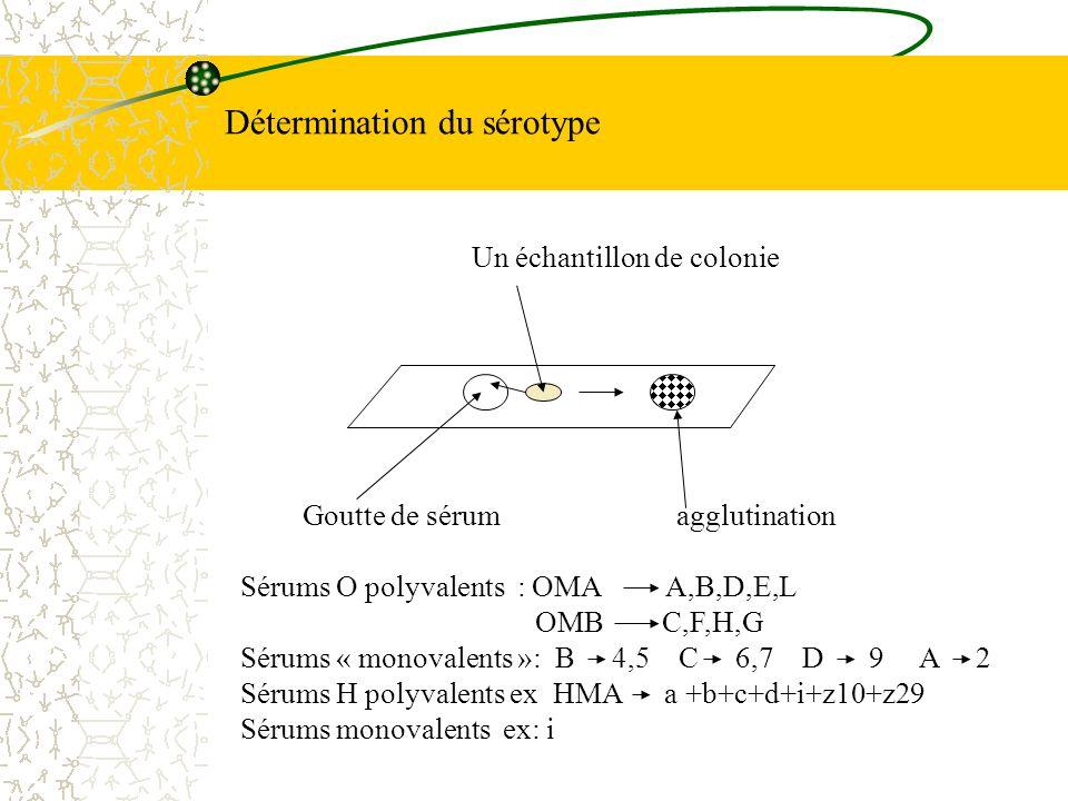 Détermination du sérotype
