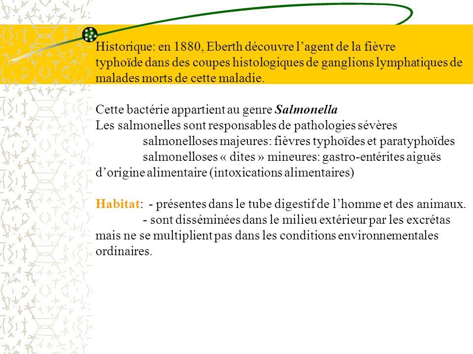 Historique: en 1880, Eberth découvre l'agent de la fièvre