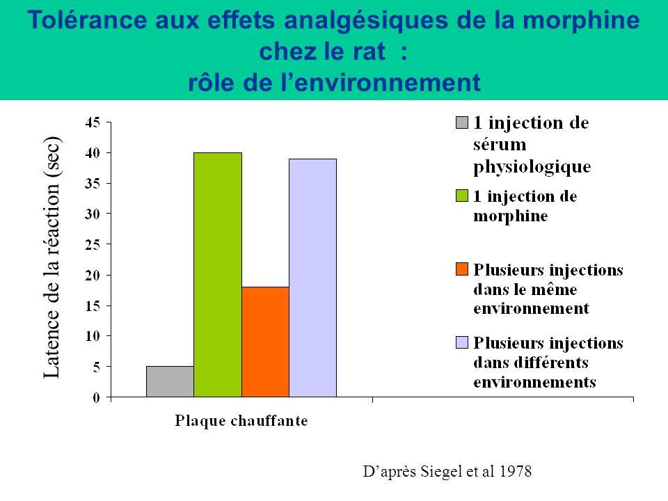 Tolérance aux effets analgésiques de la morphine chez le rat : rôle de l'environnement