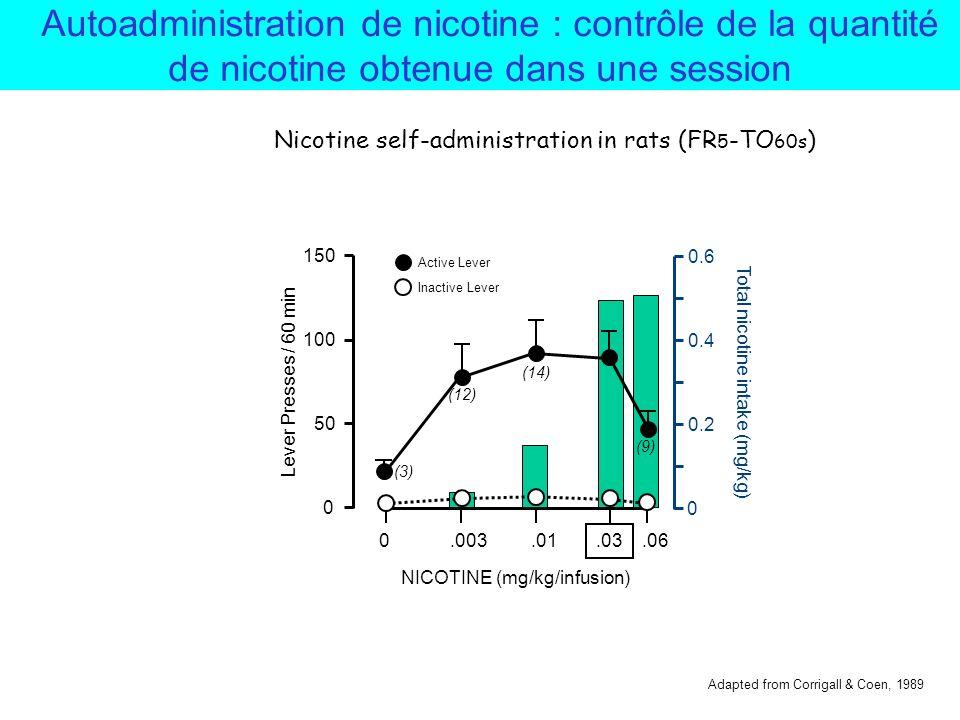 Total nicotine intake (mg/kg)