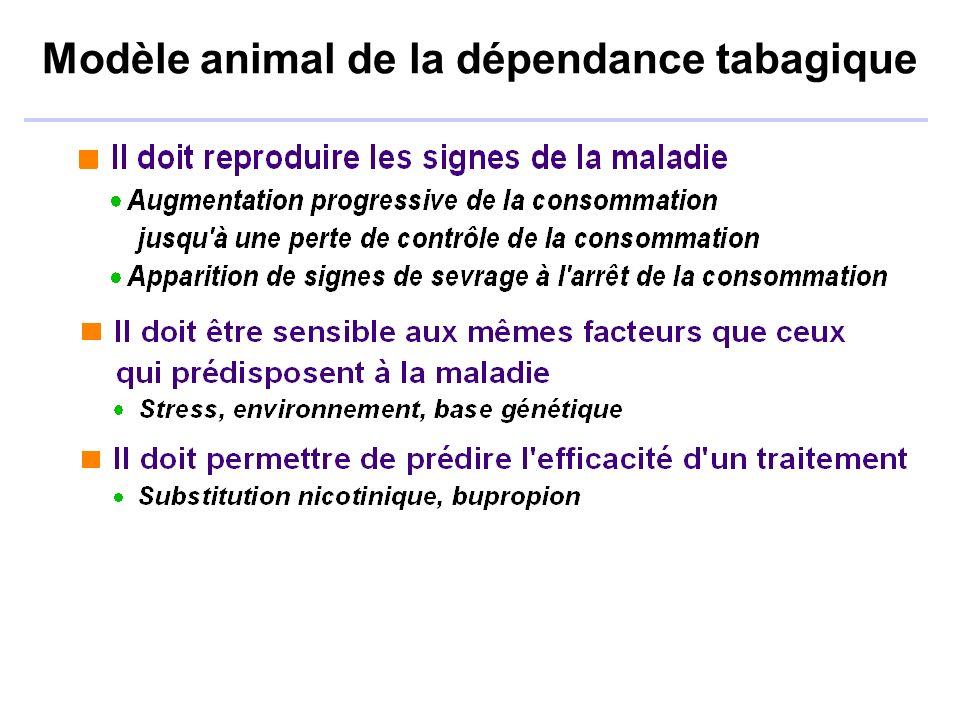 Modèle animal de la dépendance tabagique