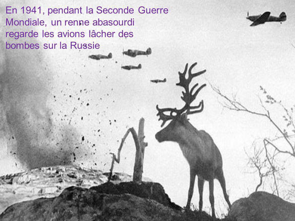 En 1941, pendant la Seconde Guerre Mondiale, un renne abasourdi regarde les avions lâcher des bombes sur la Russie