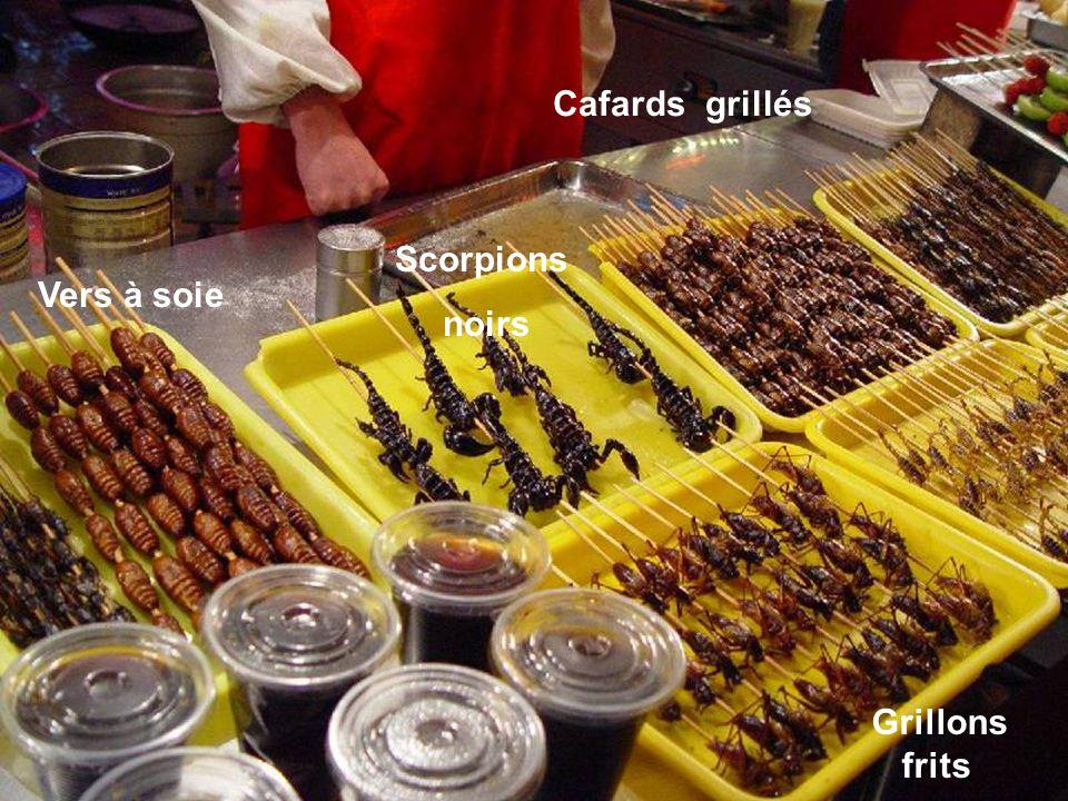Cafards grillés Scorpions noirs Vers à soie Grillons frits
