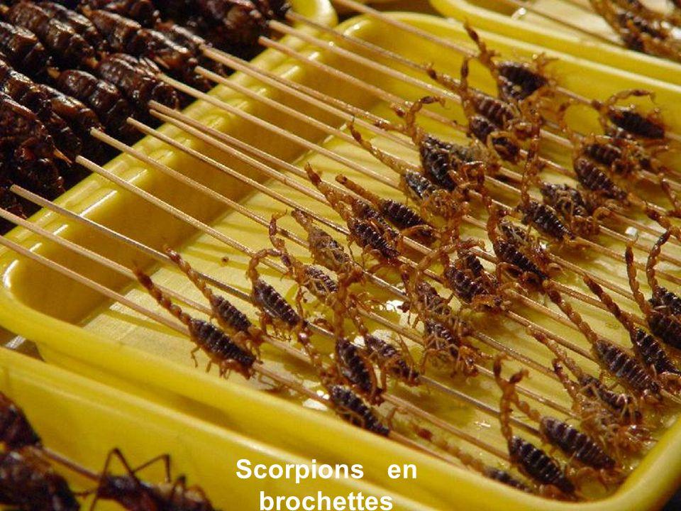 Scorpions en brochettes