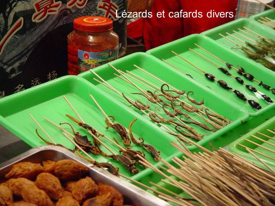 Lézards et cafards divers