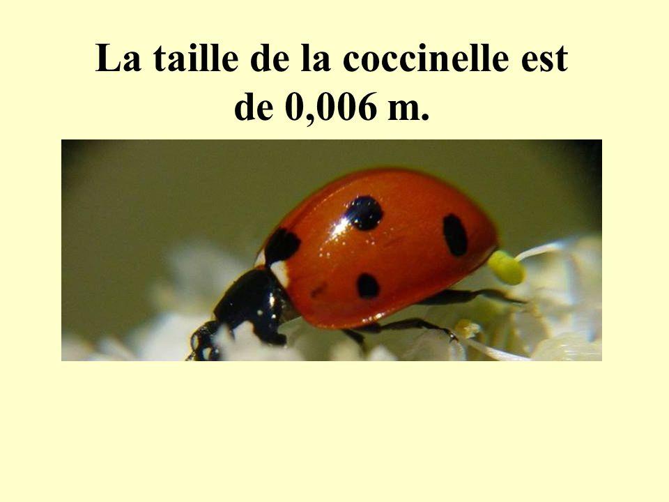 La taille de la coccinelle est de 0,006 m.