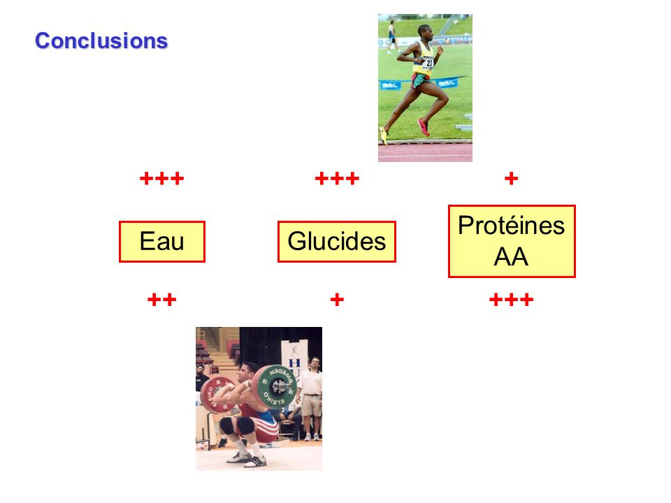 +++ + Conclusions Protéines AA Eau Glucides ++ + +++