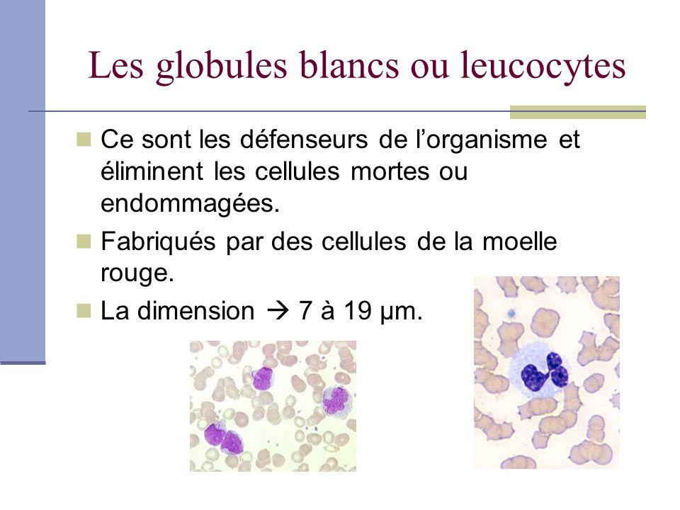 Les globules blancs ou leucocytes