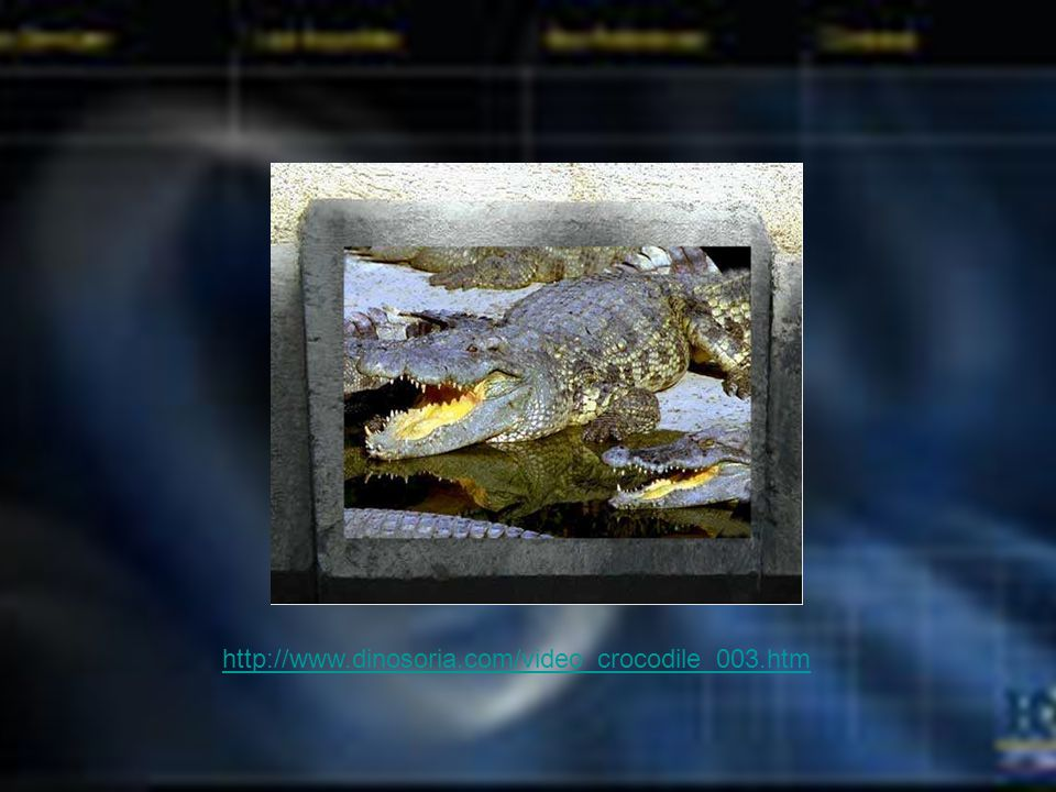 http://www.dinosoria.com/video_crocodile_003.htm