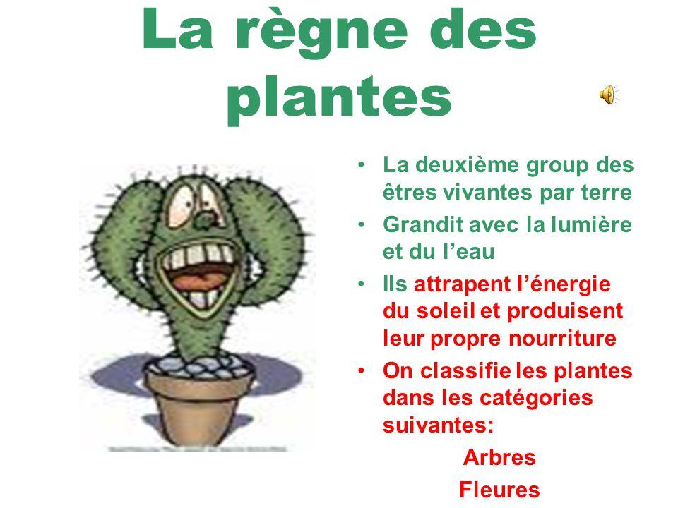 La règne des plantes La deuxième group des êtres vivantes par terre