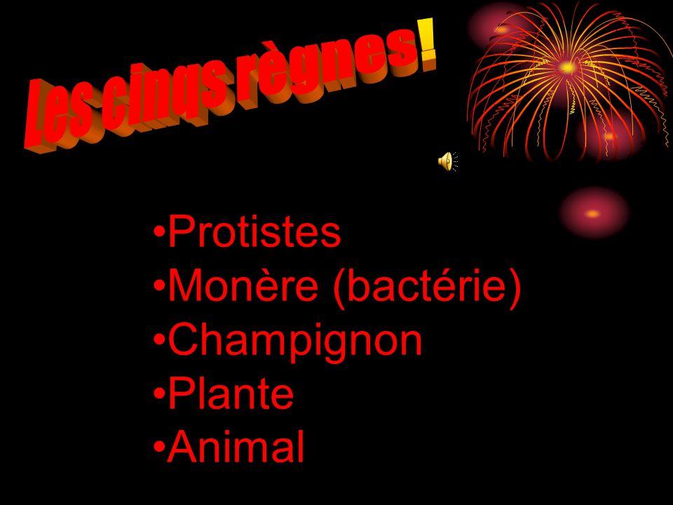 Les cinqs règnes! Protistes Monère (bactérie) Champignon Plante Animal
