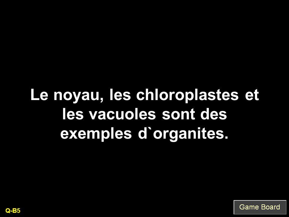 Le noyau, les chloroplastes et les vacuoles sont des exemples d`organites.