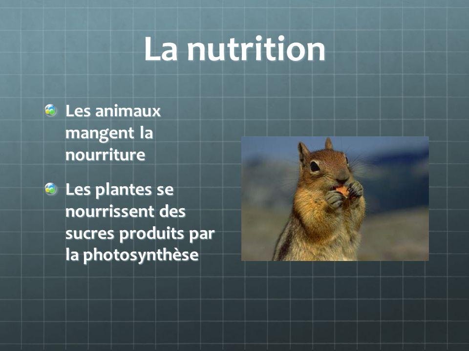 La nutrition Les animaux mangent la nourriture
