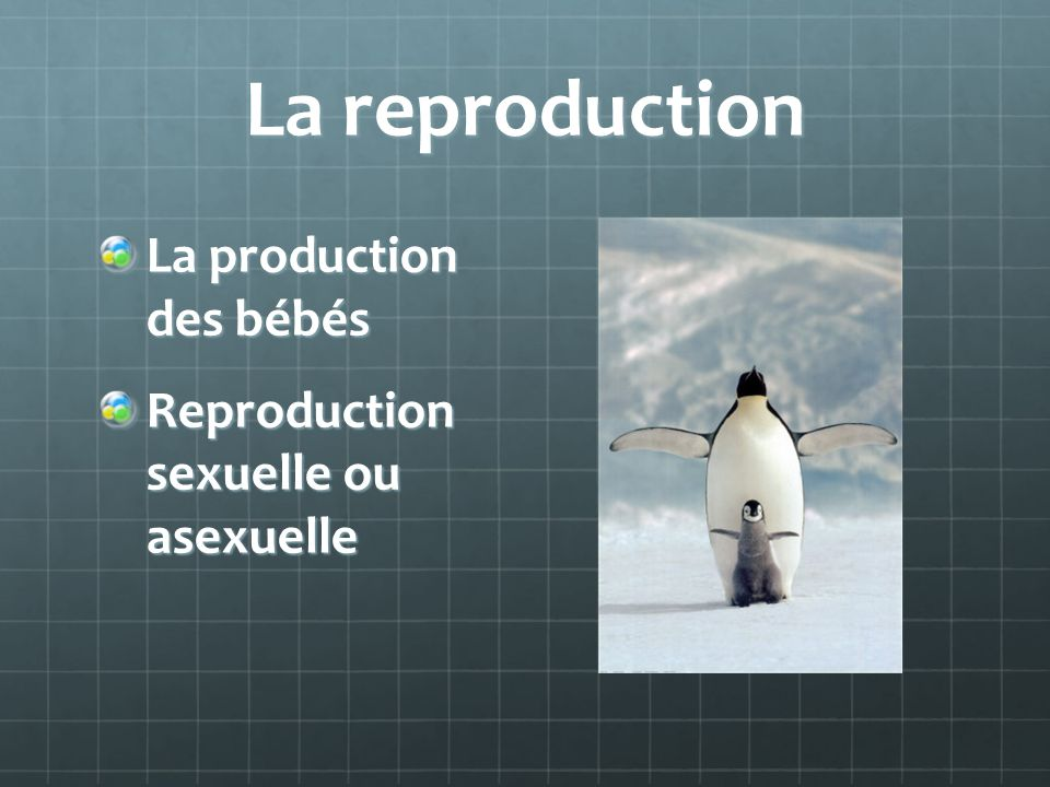 La reproduction La production des bébés
