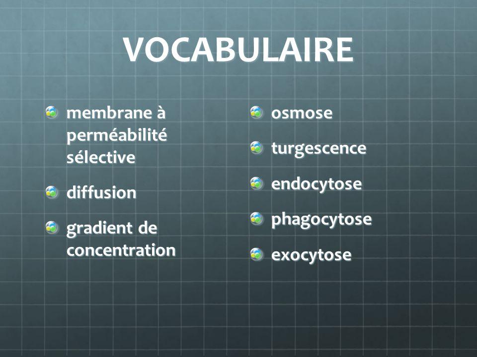 VOCABULAIRE membrane à perméabilité sélective diffusion