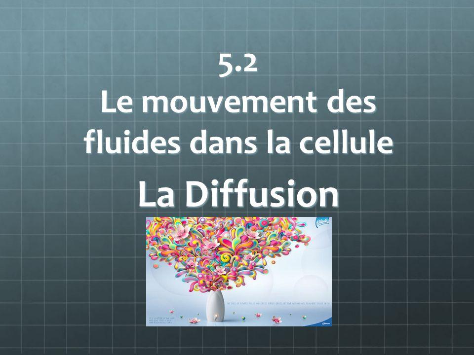 5.2 Le mouvement des fluides dans la cellule