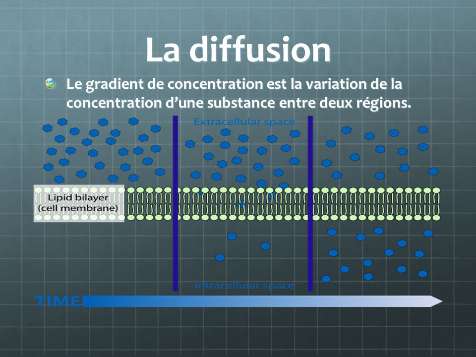 La diffusion Le gradient de concentration est la variation de la concentration d'une substance entre deux régions.