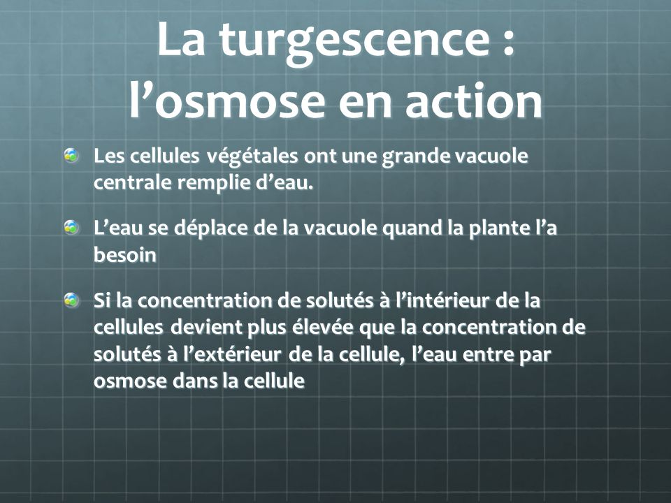 La turgescence : l'osmose en action