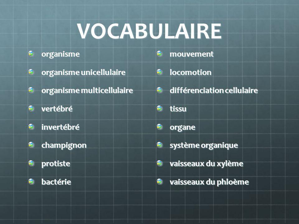 VOCABULAIRE organisme organisme unicellulaire