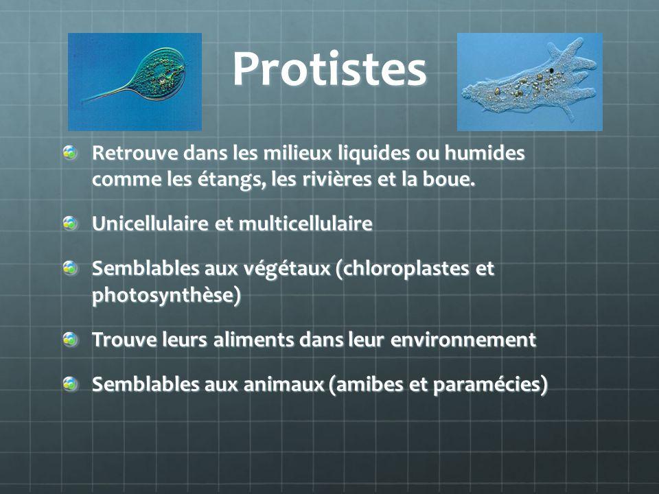 Protistes Retrouve dans les milieux liquides ou humides comme les étangs, les rivières et la boue.