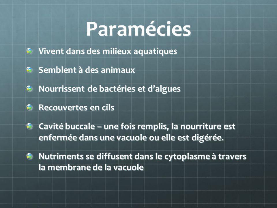 Paramécies Vivent dans des milieux aquatiques Semblent à des animaux