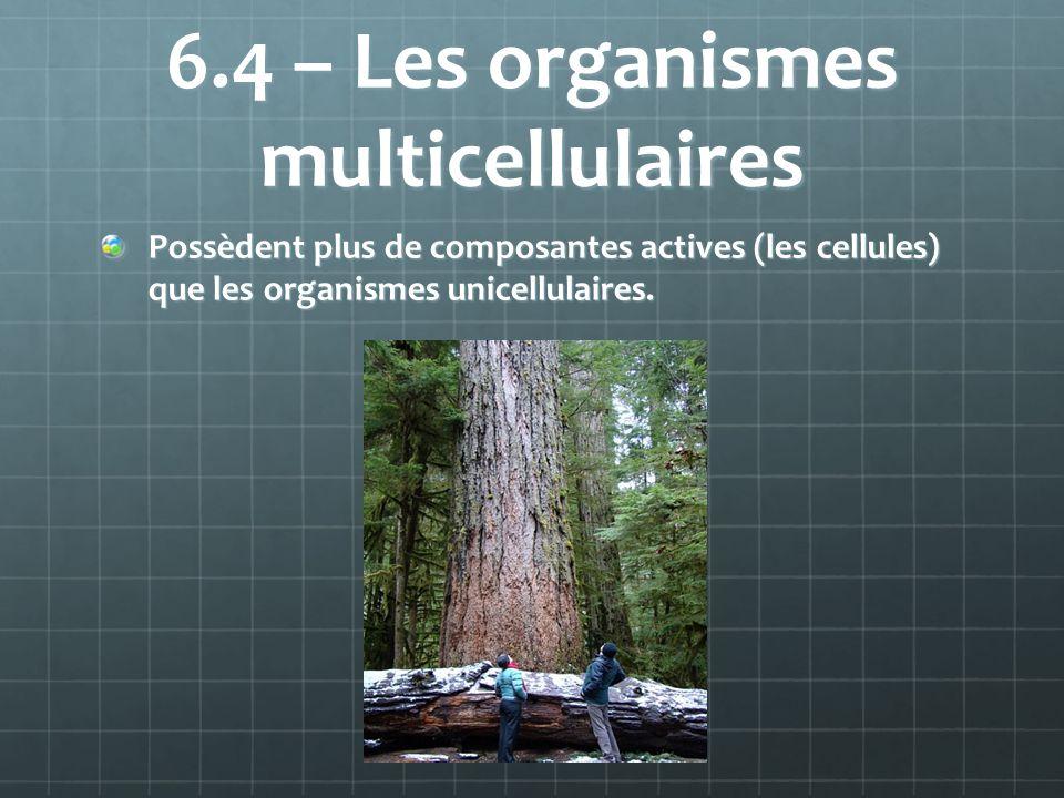 6.4 – Les organismes multicellulaires