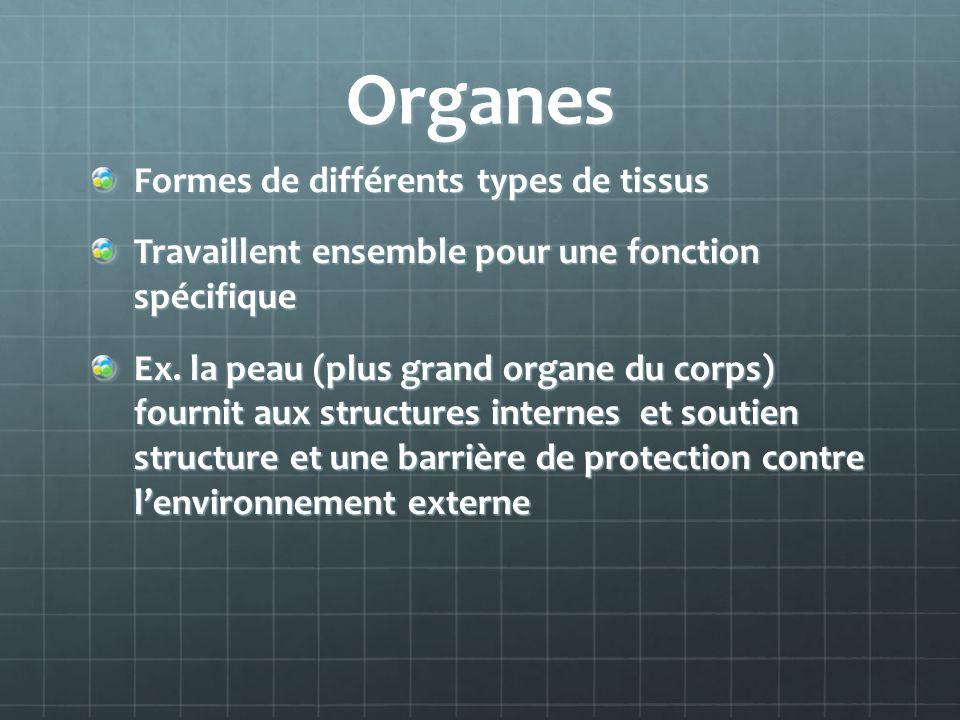 Organes Formes de différents types de tissus