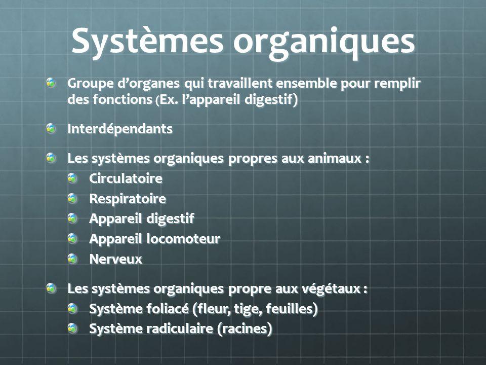 Systèmes organiques Groupe d'organes qui travaillent ensemble pour remplir des fonctions (Ex. l'appareil digestif)