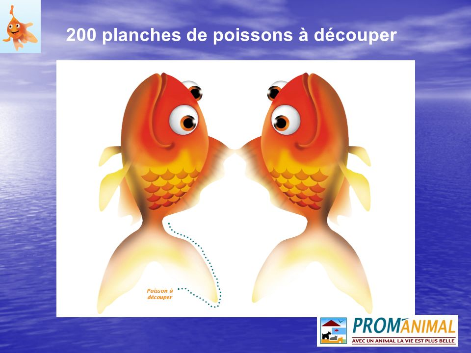 200 planches de poissons à découper