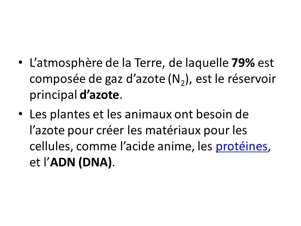 L'atmosphère de la Terre, de laquelle 79% est composée de gaz d'azote (N2), est le réservoir principal d'azote.