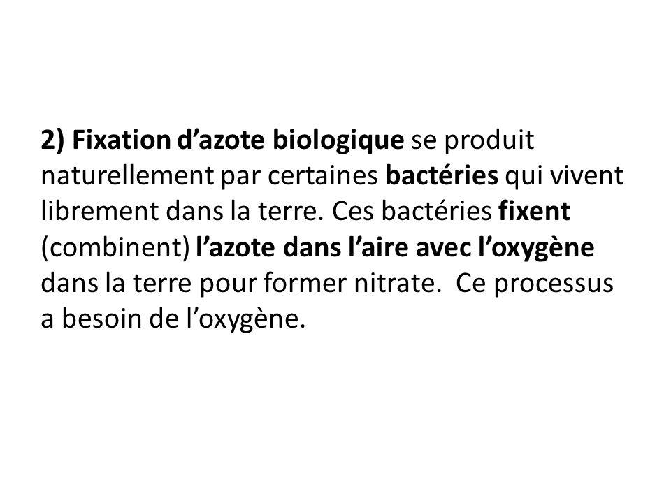 2) Fixation d'azote biologique se produit naturellement par certaines bactéries qui vivent librement dans la terre.