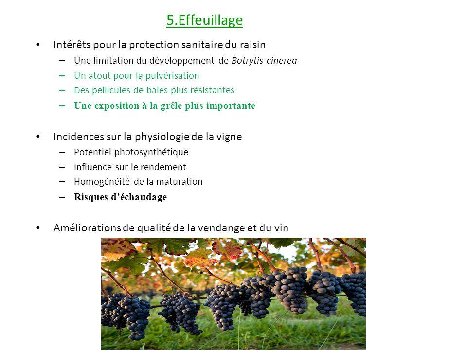 5.Effeuillage Intérêts pour la protection sanitaire du raisin