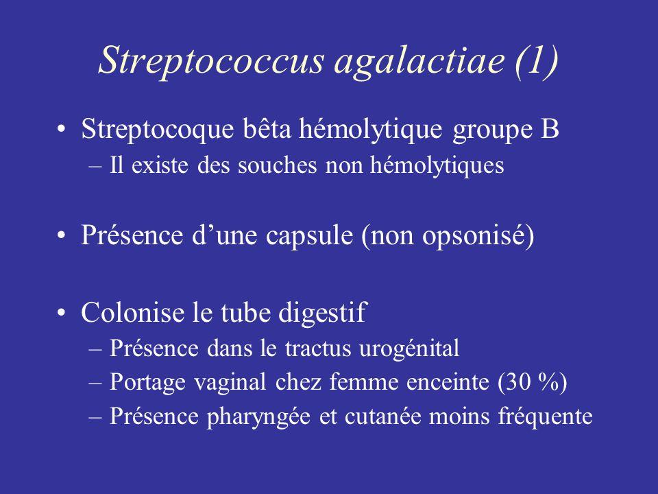 Streptococcus agalactiae (1)