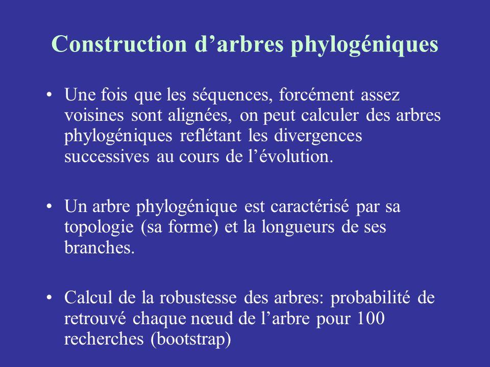 Construction d'arbres phylogéniques