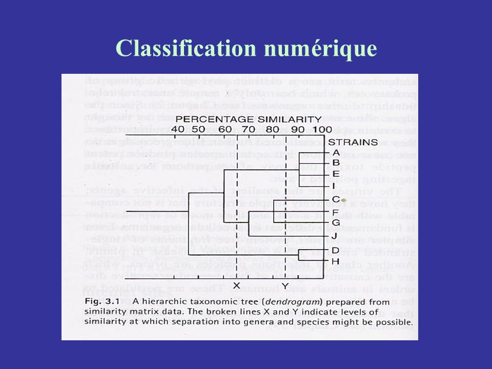 Classification numérique
