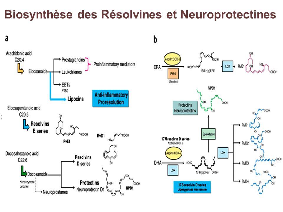 Biosynthèse des Résolvines et Neuroprotectines