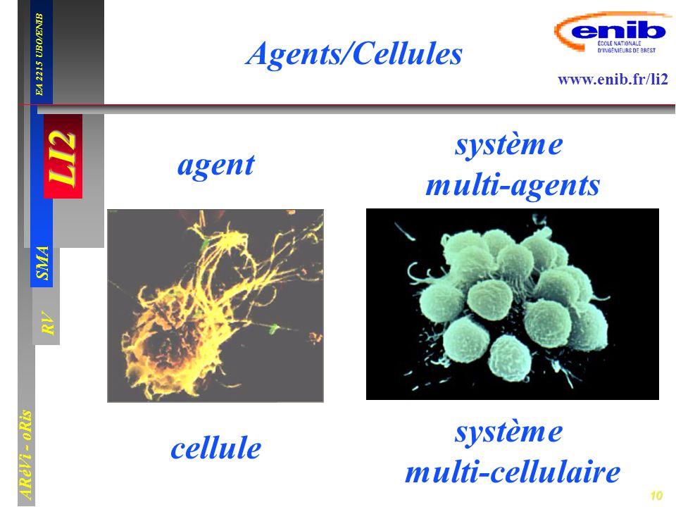 Agents/Cellules système multi-agents agent cellule système multi-cellulaire