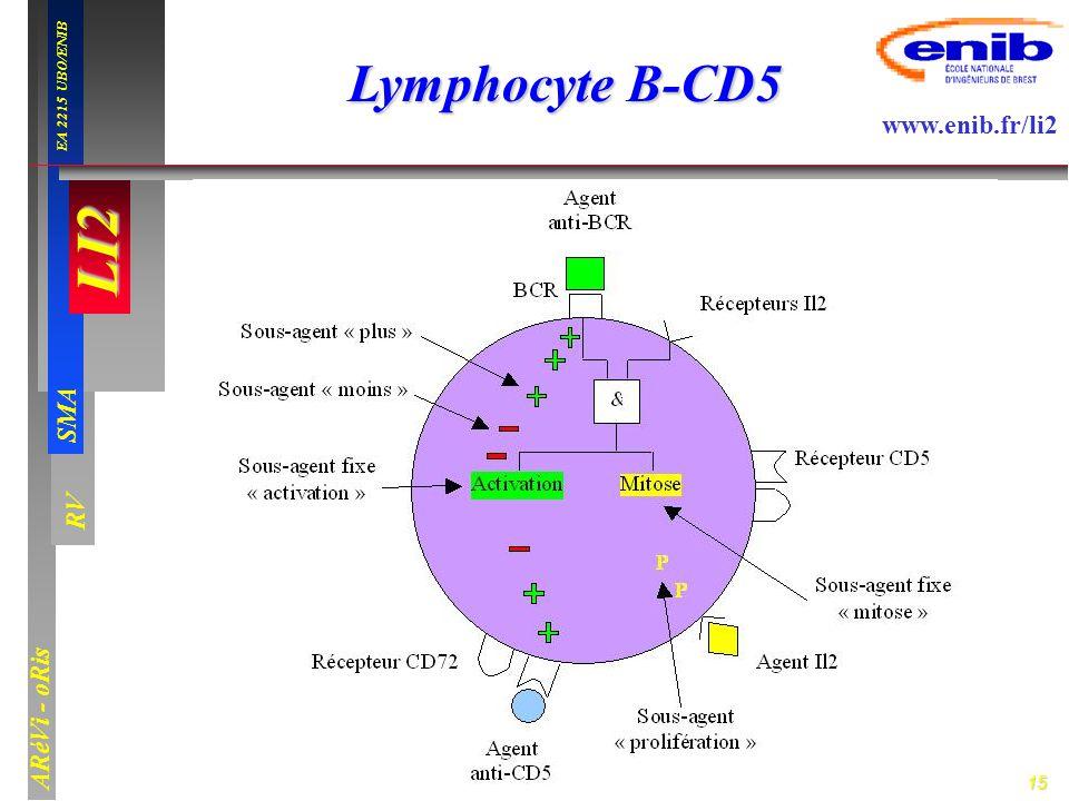 Lymphocyte B-CD5
