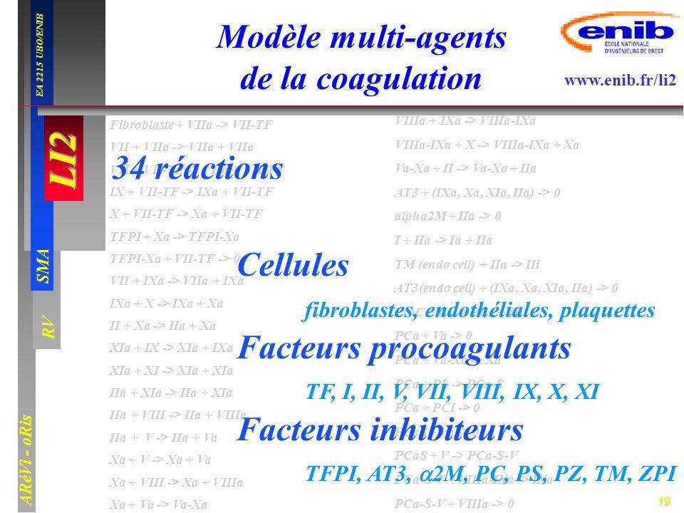 Modèle multi-agents de la coagulation
